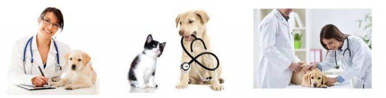 ¿Cuánto gana un veterinario?